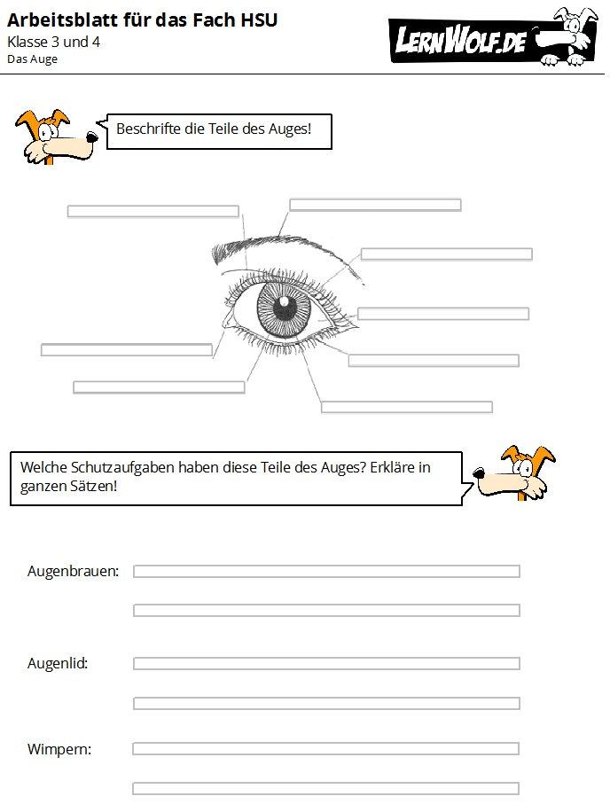 Proben Und Lernzielkontrollen Für Sachkunde Hsu In Der Grundschule